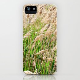 Blooming foxtail in summer sunny day iPhone Case