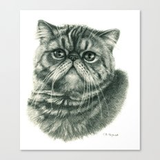 Shorthair Persan cat G088 Canvas Print