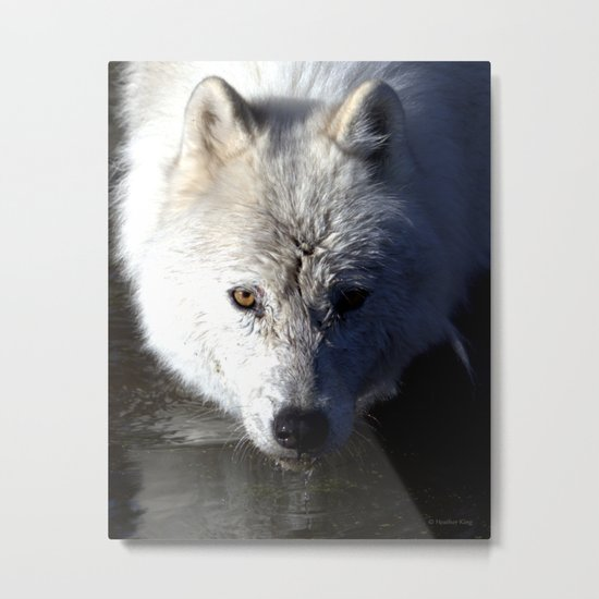 Quenched Metal Print