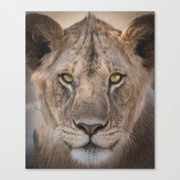 Lion Selfie Mr Vain Canvas Print