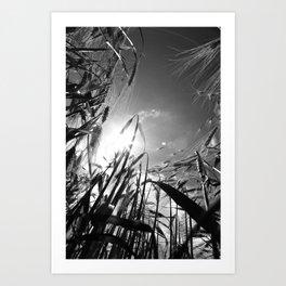 In the grain Black white Art Print