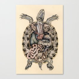 Anatomical Dissection of a Red Eared Terrapin Canvas Print