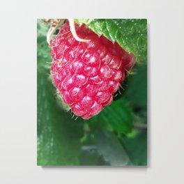 Plump Raspberry Shot Up Close Metal Print