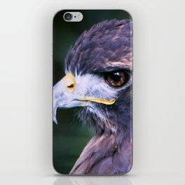 Red-tailed Hawk iPhone Skin