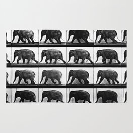 Time Lapse Motion Study Elephant Color Africa India Conservation Environment Rug