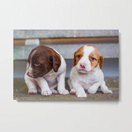 Cute Puppies (Color) Metal Print