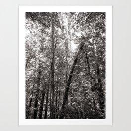 A walk in Richmond Art Print