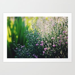 Morning Light Art Print