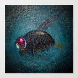 Dead Fly Canvas Print