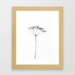 heracleum Framed Art Print