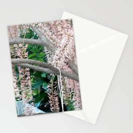 The Pecan Bloom. Stationery Cards