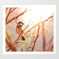 Morning sparrow Art Print
