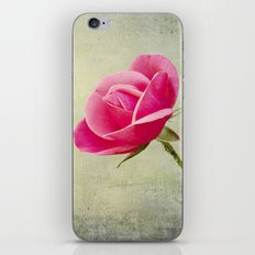Virgin Rose iPhone & iPod Skin