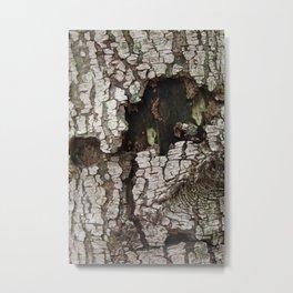 wounds of tree Metal Print