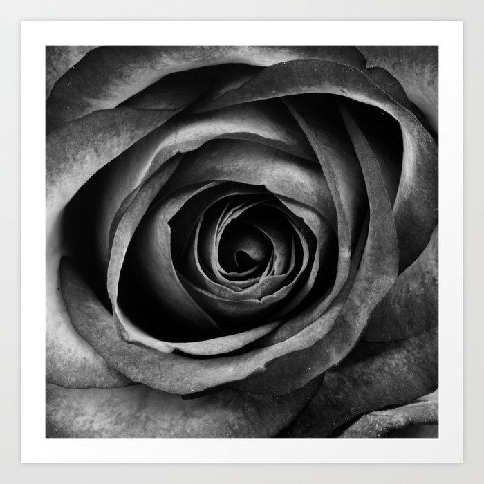 Black Rose Flower Floral Decorative Vintage Art Print By