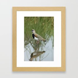 Southern Lapwing in Shallow Water Framed Art Print