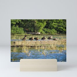 Ducks in a Row on Sebago Mini Art Print
