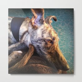 Greyhound Lurcher Metal Print