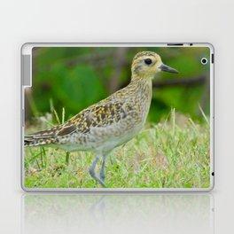 Pacific Golden Plover Laptop & iPad Skin