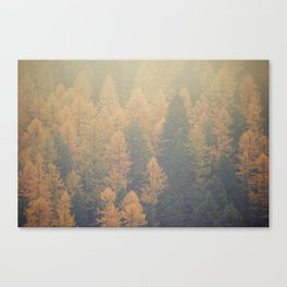 Larch Canvas Print