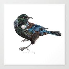 New Zealand Tui Canvas Print