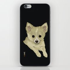 Long Hair Chihuahua iPhone & iPod Skin