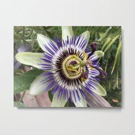 Passion fruit flower Metal Print