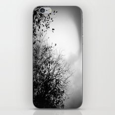 Winter trees iPhone & iPod Skin