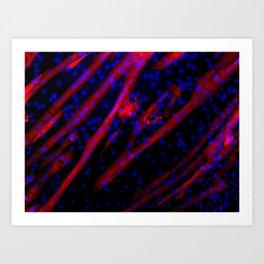 Microscopic Muscle Cells Art Print