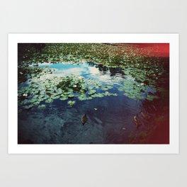 Ducks Art Print