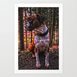 HDR Boxer she-dog in the forest Art Print