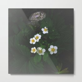 Strawberry Blossoms Metal Print