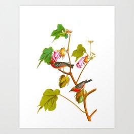Bay Breasted Warbler John James Audubon Vintage Scientific Illustration American Birds Art Print