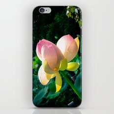 Blossom at the Grounds iPhone & iPod Skin