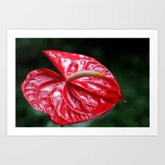 Red Flower  Art Print