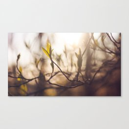 warmest wishes Canvas Print
