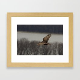 Vultures know the inventory of a flood Framed Art Print