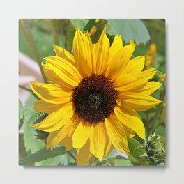 Sunflower nature photo Metal Print