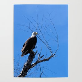 Clear Sight (Bald Eagle) Poster