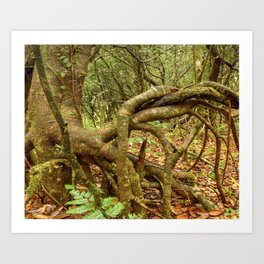 Dancing trees in the cloud forest  -  Tradewinds trail El Yunque rainforest PR Art Print