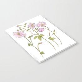 Pink Anemone Notebook