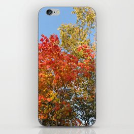 Autumn Leaves II iPhone Skin