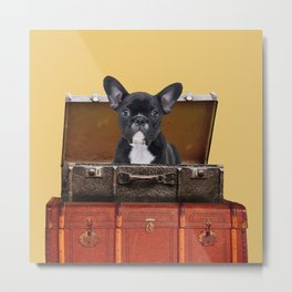 French Bulldog sitting in old suitcase box Metal Print