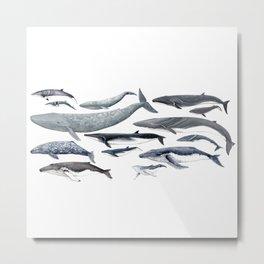 Whale diversity Metal Print