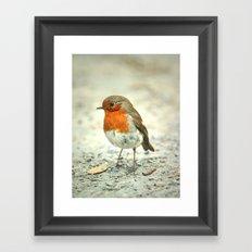 Robin the Great Framed Art Print