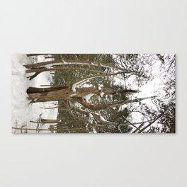 A dead pine Canvas Print
