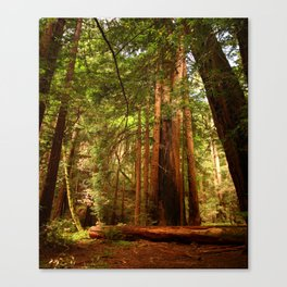 Muir Woods Walkway Canvas Print