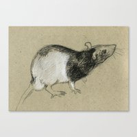 rat Canvas Prints featuring Rat by Freeminds