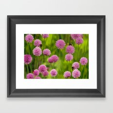 Bumble Bees on Pink Chives Framed Art Print