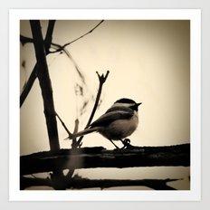 Little Bird Art Print